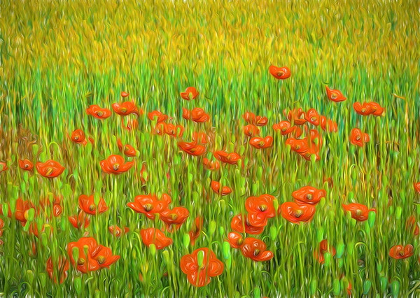 Poppies and Wheat No.1