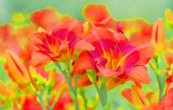 Lilies No. 1