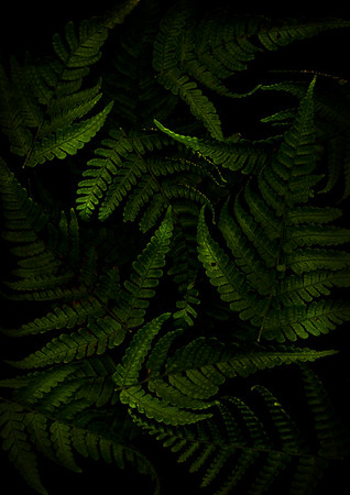Ferns & Seeds