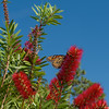 Camp Blanding Flowers and Butterfly