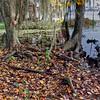 Autumn in Williams Park