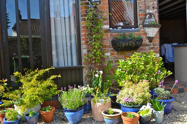 flowers 2011 courtyard