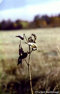 End of life for a seed pod