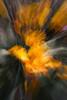 Iris on Fire