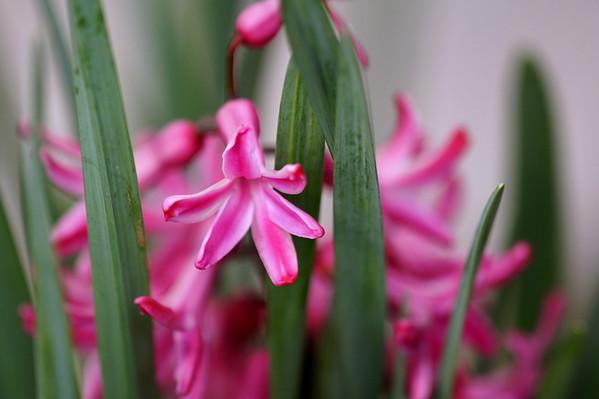 Flower's for me