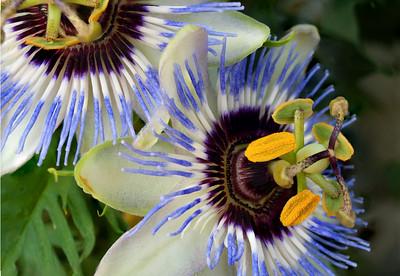 090724_Flowers_1-3