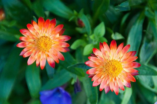 090724_Flowers_82