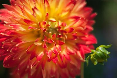 090724_Flowers_176