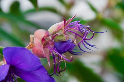 090724_Flowers_54