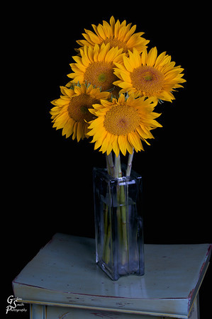 Sunflower Arrangement.  I've been shooting more with a large softbox and this subject was one that I liked.  It's a learning experience.  Please enjoy.