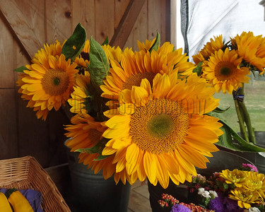 Sunflowers at Farm Stand