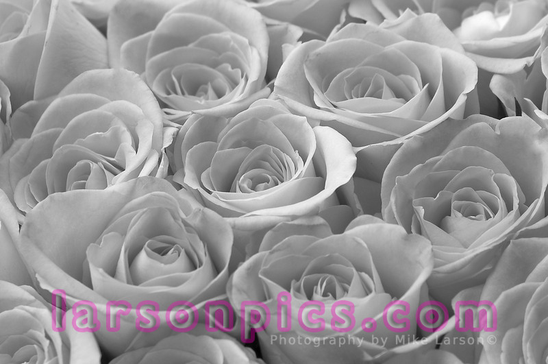&W Roses
