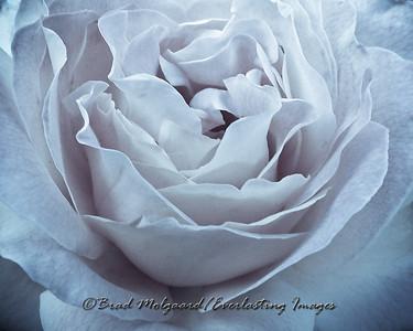 """""""Selenium Rose"""""""