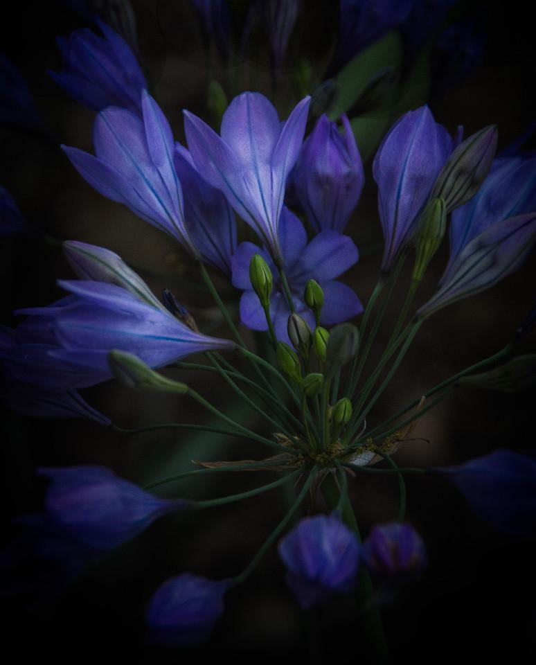 Beautiful blue wild flowers