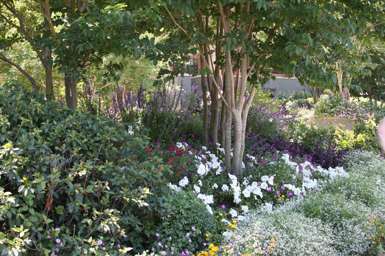 Wild Flower Garden - Lakeland, Florida.
