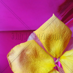 Yellow Petals on Pink Vase