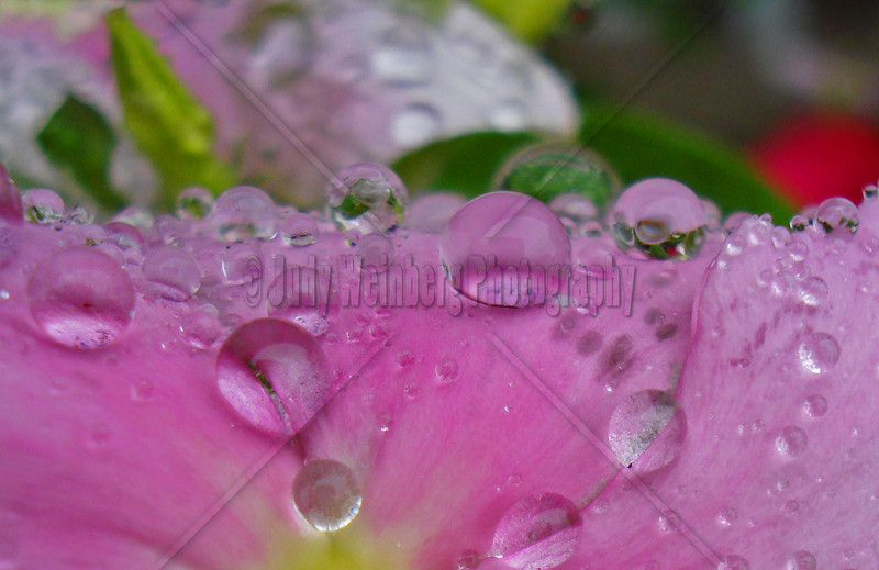 Rain Kissed Flower