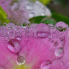 Rain Kissed Flower