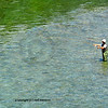 a fly-fisherman casts a tight loop of line for trout on a clear mountain stream
