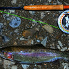 a rainbow trout caught on a fly while fishing at night. A rod and reel are included for scale. the fish was returned to the river alive and well