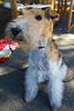 Balthazar, the wonder dog.