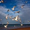 Seagulls Gilson Beach_