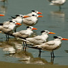 Birds of a Feather - Morris Island