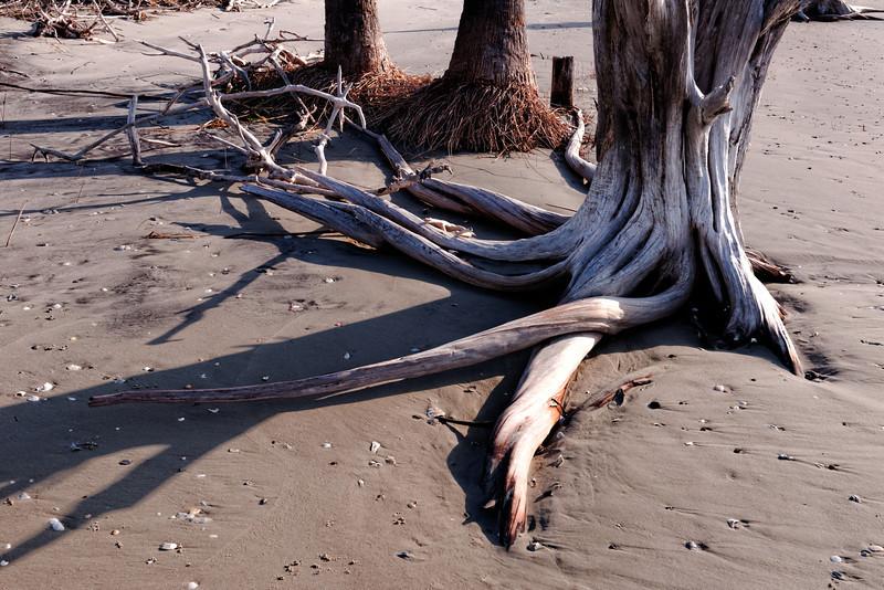 Roots - Morris Island Boneyard