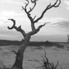 Tree on Folly Beach
