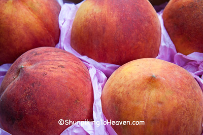 Fresh Peaches in Pink Tissue, Dane County, Wisconsin