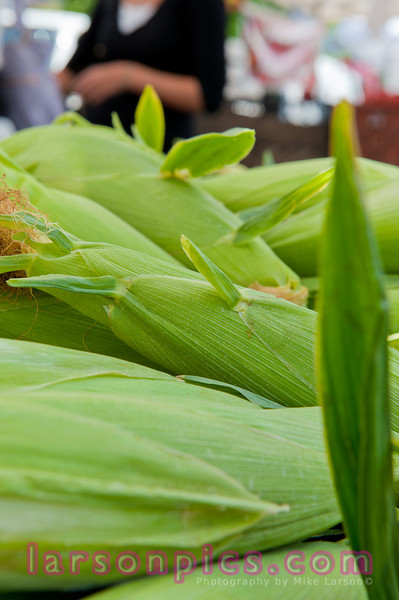 Farmers Market Corn