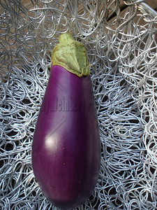 Resting Eggplant