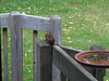Chipmunk on the deck in Kalamazoo