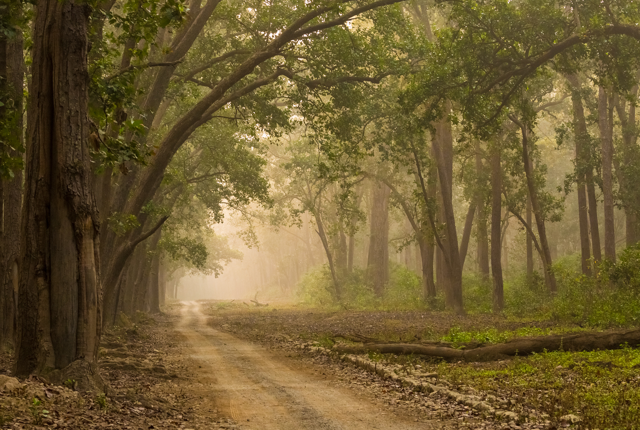 #13 Forest of Corbett National Park