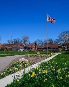 Daffodils and Flag in Neighborhood Park, Detroit
