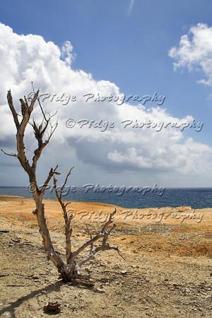 East Coast, Barbados