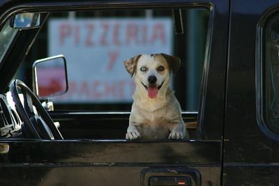 Puerto Jiminez, Costa Rica dog watching his owner having breakfast