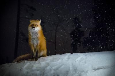 Fox for reddit