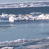 Ice flows in front of our camp and boat ride to see wildlife