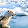 our protector from polar bears, eager to get off the boat