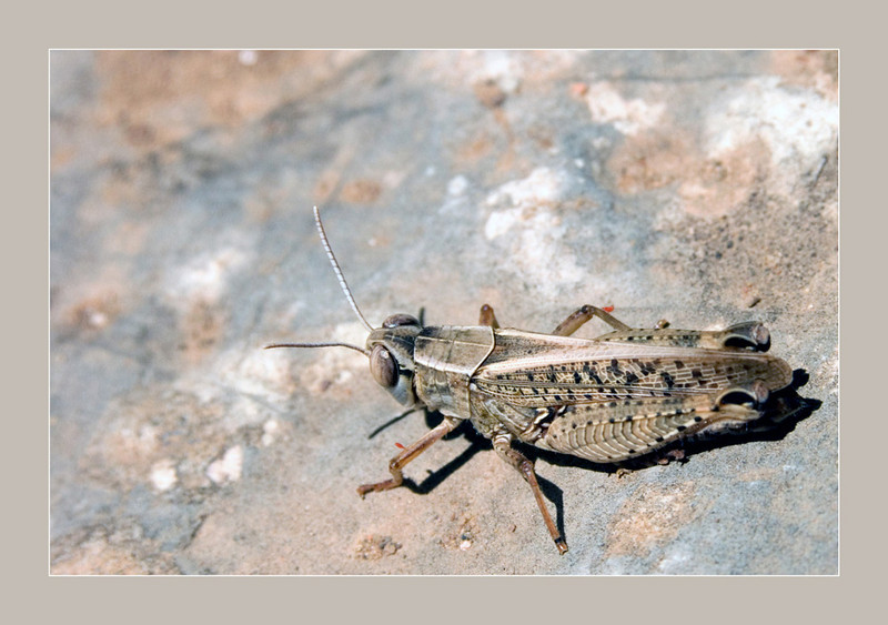 Grasshopper<br /> Konica Minolta Dimage A2