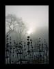 Frost Konica<br /> Minolta Dimage A2