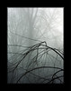 Branches<br /> Konica Minolta Dimage A2