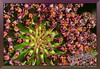 """A Thousand Cactus Flowers <a href=""""http://lenslord.com/2012/02/16/a-thousand-cactus-flowers/"""">Link to the article on my blog.</a> <a href=""""http://www.thelenslord.com/Professional/Flowers/8757559_VX7JzW#!i=1714370329&k=B2VDwmr"""">Link to buy this image.</a>"""