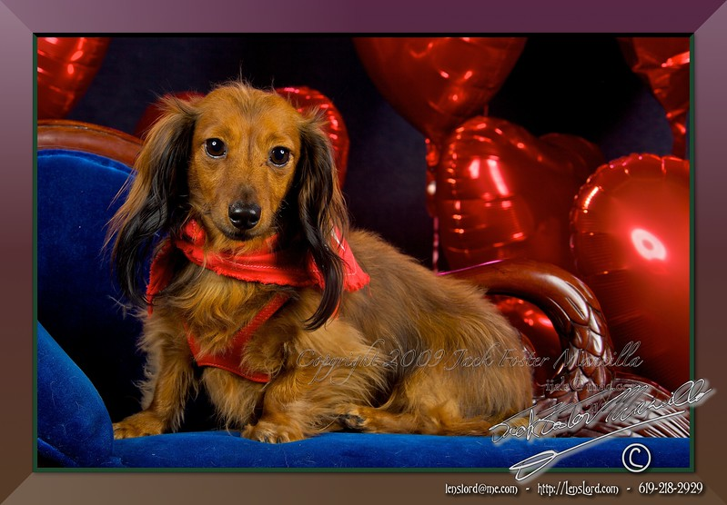 """My Funny Valentine - Valentines Day <a href=""""http://lenslord.com/2012/02/14/my-funny-valentine-valentines-day/"""">Link to the article on my blog.</a>"""