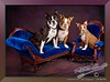 "Boston Terriers - We're having a conversation here. ... You need something? <a href=""http://lenslord.com/2012/02/21/were-having-a-conversation-here-you-need-something/"">Link to the article on my blog.</a>"