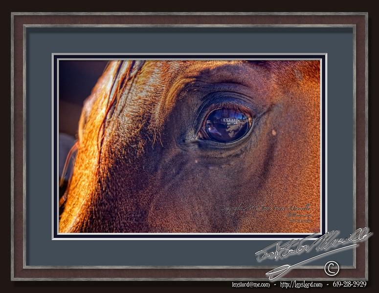 """Eye of the Horse  <a href=""""http://lenslord.com/2010/10/14/eye-of-the-horse/"""">Link to the article on my blog</a>"""