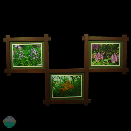 Three flowers that I framed that was taken along the AT.  I created a unique design to frame them together.<br /> <br /> Pine.