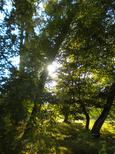 Sunlight in the forest at Versailles.