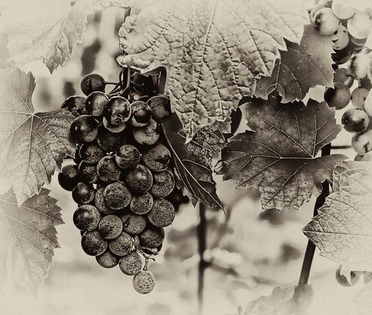 Digital Art Grapes